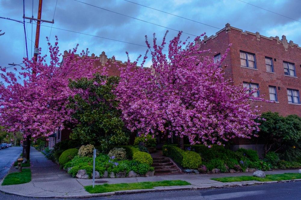 Capitol Hill trees April 27 2017