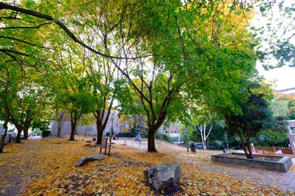 Capitol Hill Seattle Fall Fujifilm