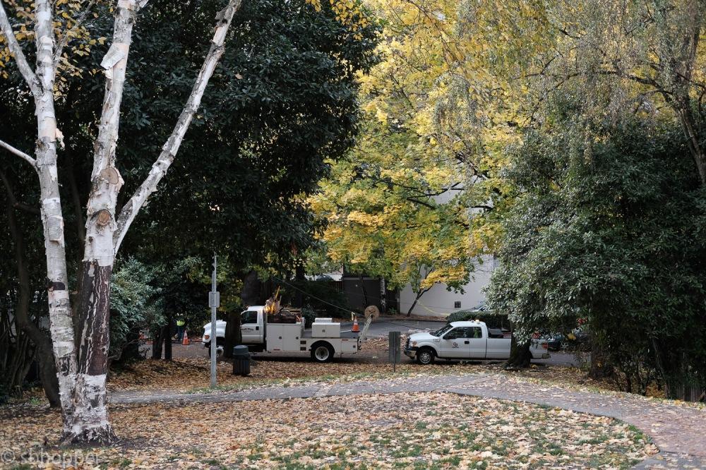 Tashkent,Tashkent Park,Capitol Hill,Seattle